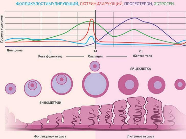 Могут ли быть перед овуляцией, во время или после нее кровянистые выделения, каковы причины появления крови?