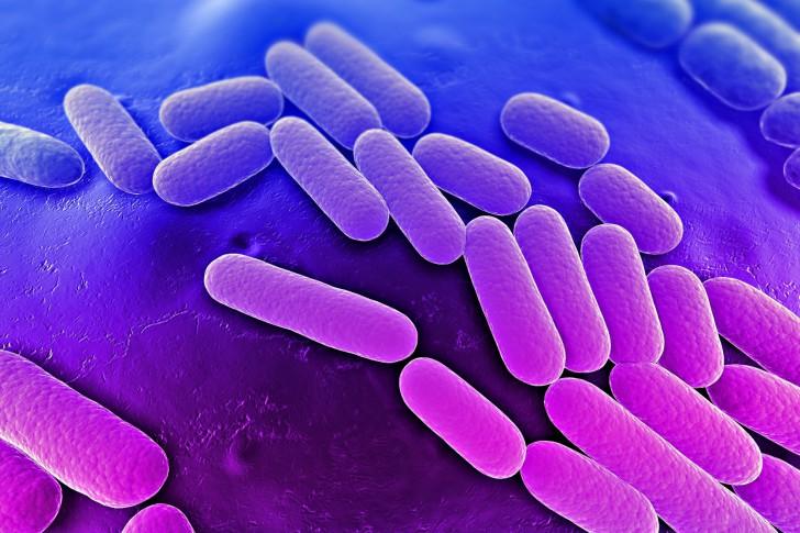 Выявление клебсиеллы в кале у грудничка: симптомы и лечение заболевания