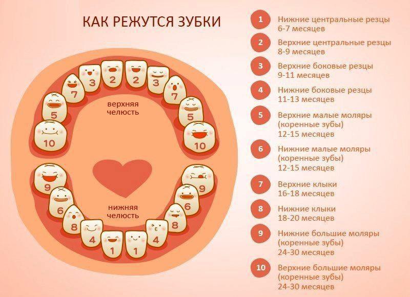 Прорезывание молочных зубов у детей: симптомы у малышей, порядок и очередность появления со схемой