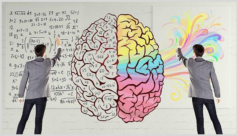 Функции правого и левого полушария мозга человека