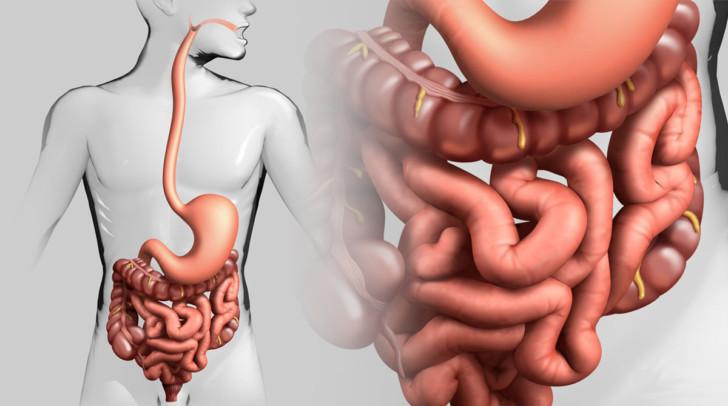 Где располагается кишечник у женщины во время беременности и что делать, если он болит?