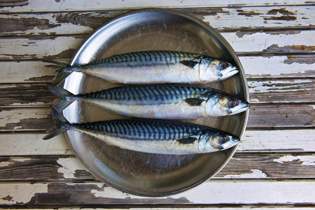 Польза и вред скумбрии для организма, химический состав рыбы, способы приготовления и противопоказания