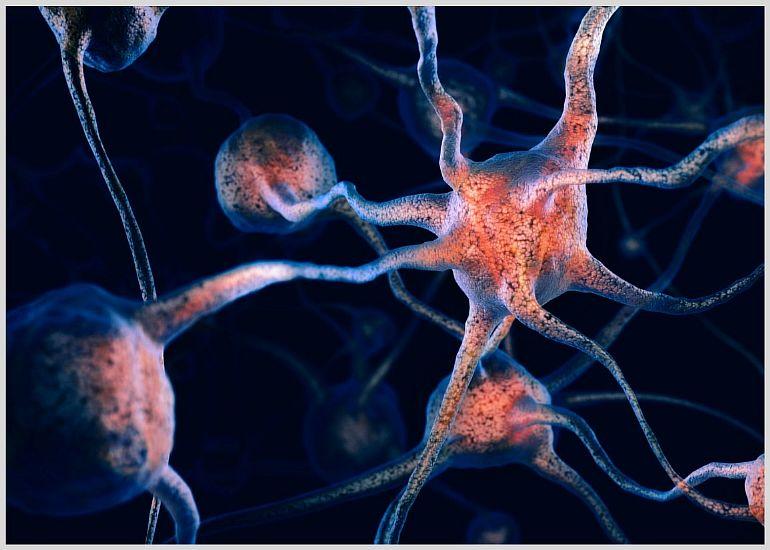 Сколько процентов своего мозга использует человек
