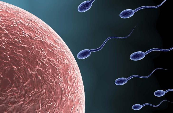 Как и где происходит процесс зачатия ребенка, какие ощущения у женщины в момент оплодотворения яйцеклетки?