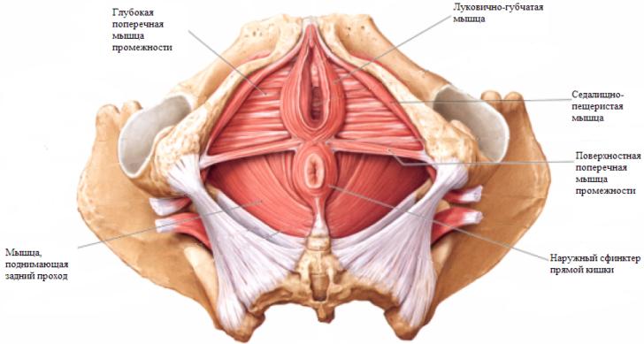 Внешний вид и другие особенности влагалища после родов, восстановление промежности рожавшей женщины
