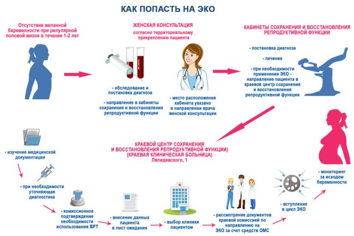 Квота на ЭКО по ОМС: как получить и как долго ждать, сколько раз можно делать процедуру?