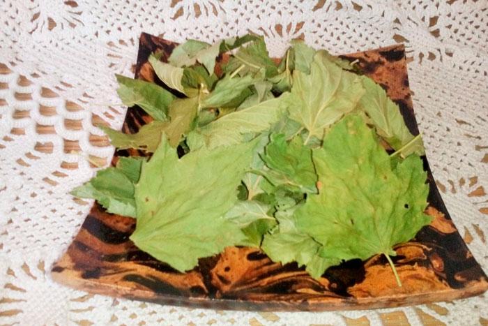 Желчегонные травы при застое желчи список и рекомендации