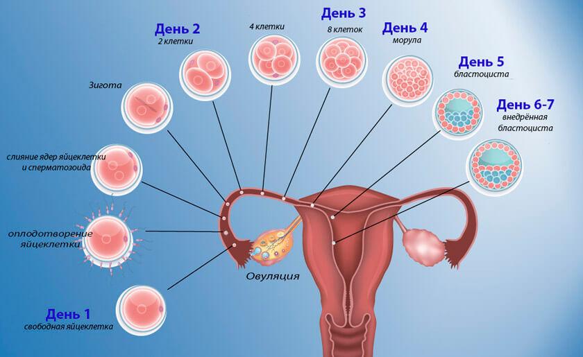 В каких случаях может наступить беременность у девушки и женщины, когда можно и нельзя забеременеть?